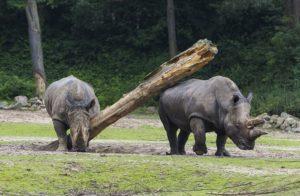 Burgers Zoo met korting