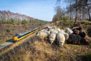 Treinreizigers spreiden zich goed: spitsdrukte verdwenen